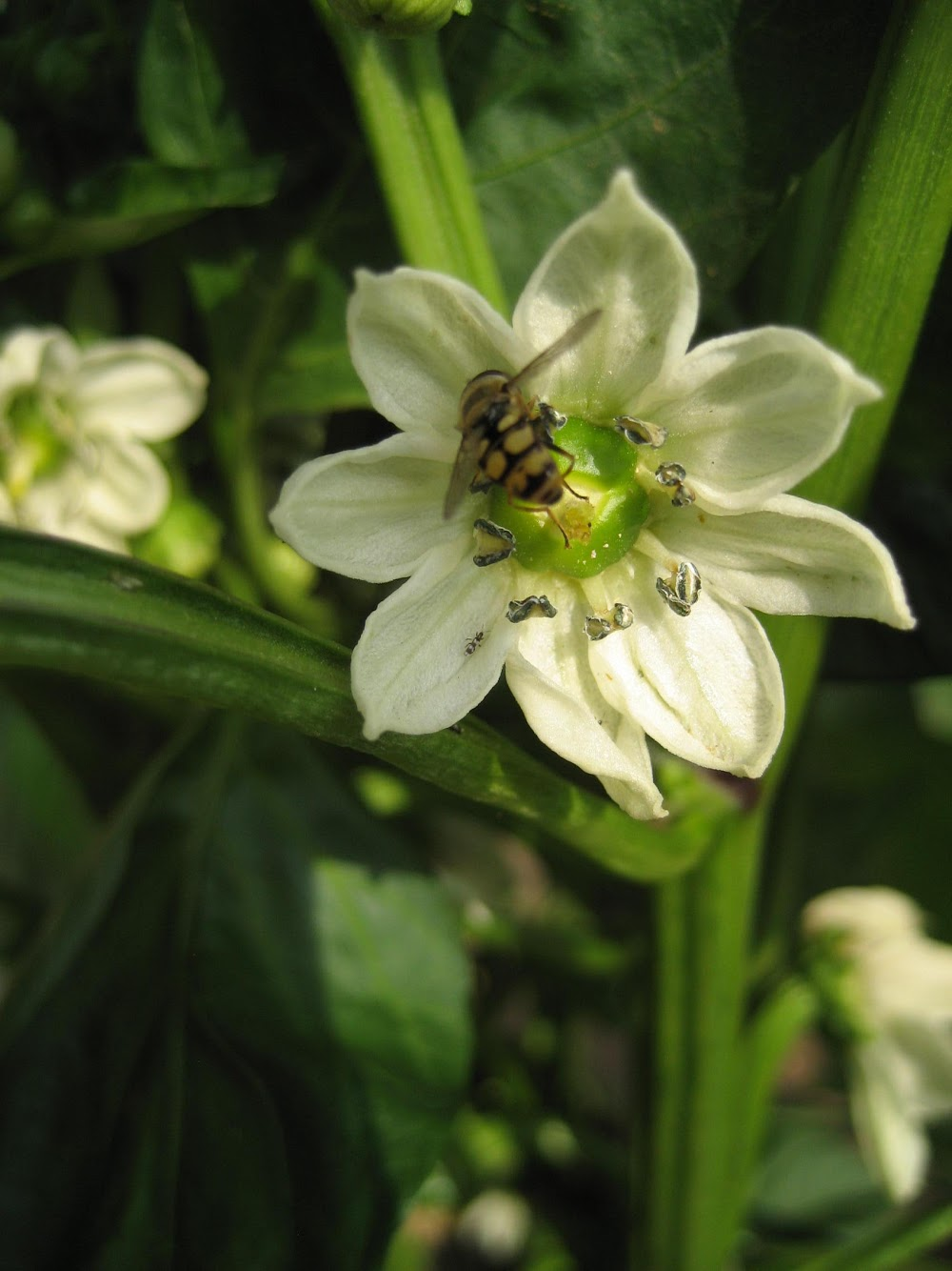 protéger et polliniser les plantes