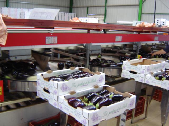 Calibrage des légumes